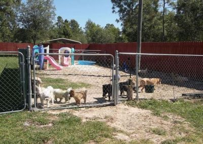 Four Paws Kennel in Brooksville, FL (Hernando County)